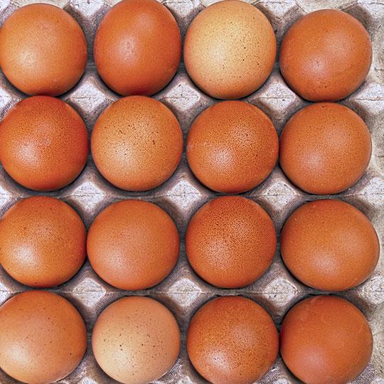 10禽蛋类